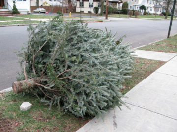 Christmas Tree Curb